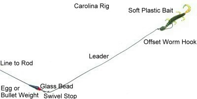 bass fishing carolina rig techniques